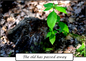 """Image of plant and text """"The old has passed away"""""""